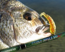 Starlo's Rituals Of Fishing