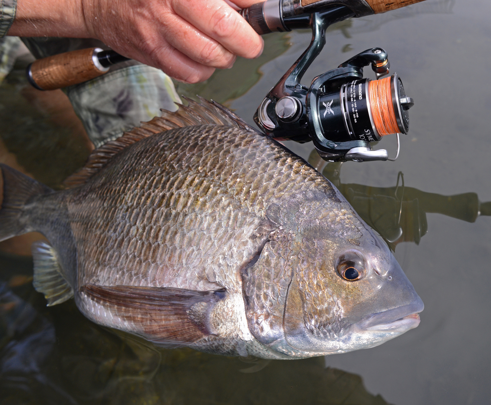 """Light """"finesse"""" tackle is critical to open-water breaming."""