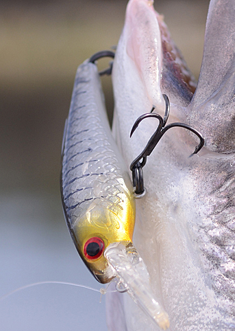 These lures carry fine gauge, extra-sharp hooks.