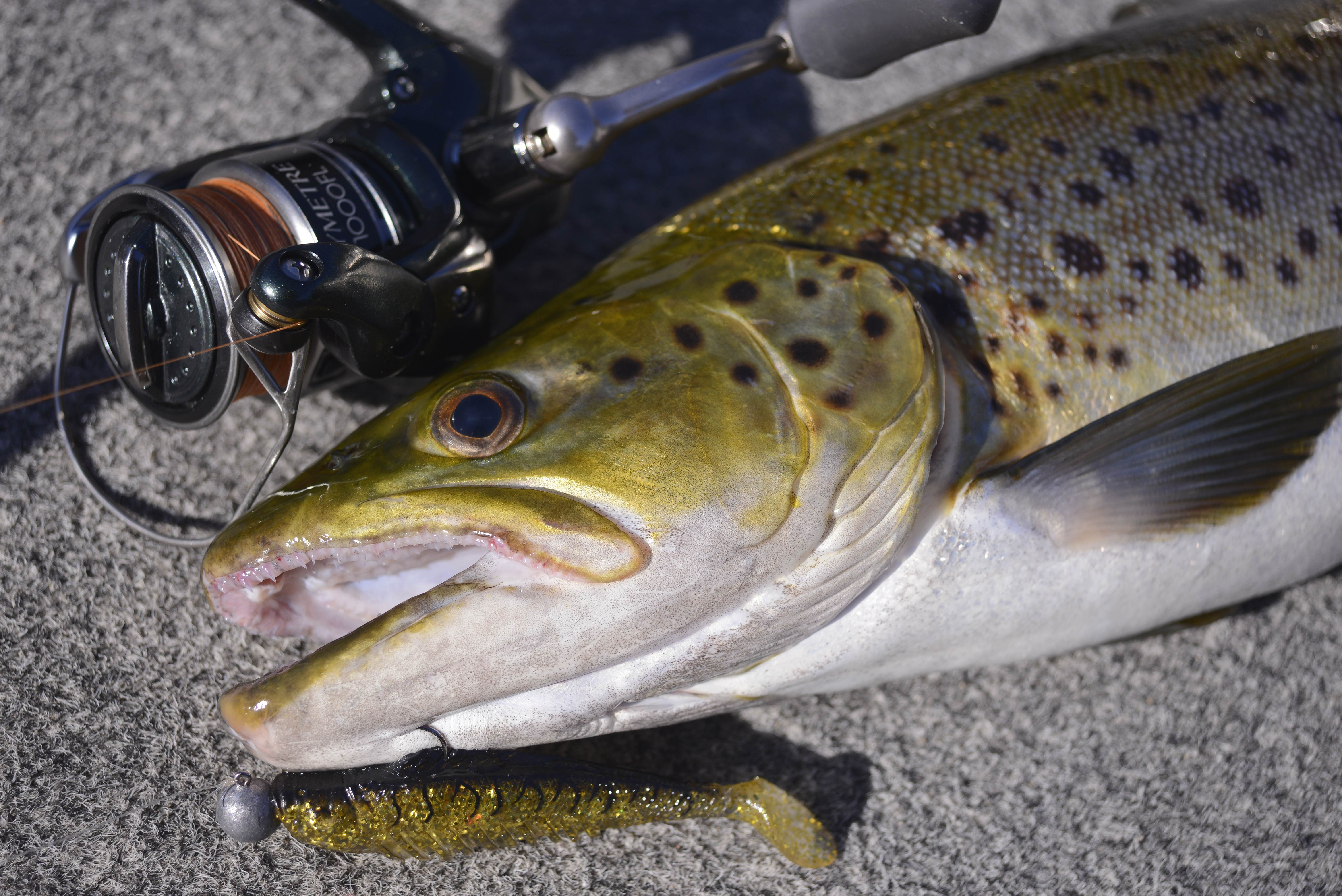black singles in trout lake Rainbow trout lake fishing if you're fishing on a larger lake with a single rod, go with a medium-weight fishing rod and reel.
