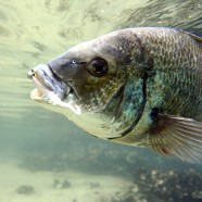Catch Your First Bream On A Soft Plastic!