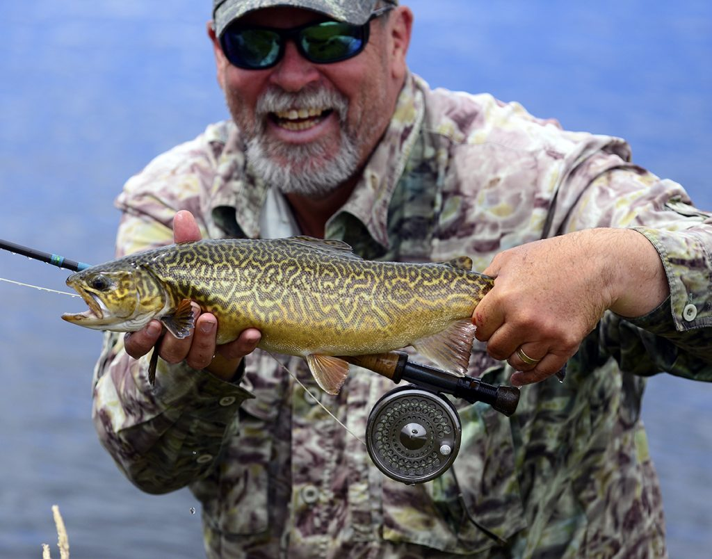 Steve 'Starlo' Starling reckons tiger trout punch well above their weight.