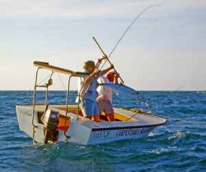 Mackerel are being targeted further and further from shore.